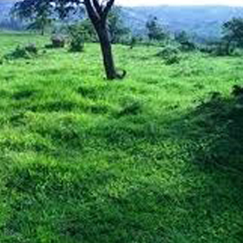 help to buy a land